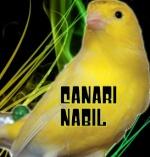 nabola-canari