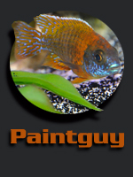 Paintguy
