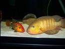 fishluvr12