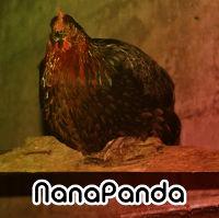 NanaPanda