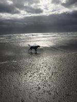 All Breeds Dog Forum 35-92