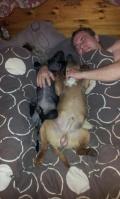 All Breeds Dog Forum 5-55