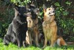 All Breeds Dog Forum 80-91