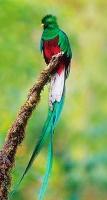 Quetzal (Gépa)