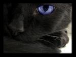Oeil d'Ébène