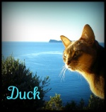 Duckshine