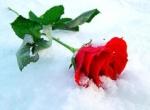 روح الشتاء