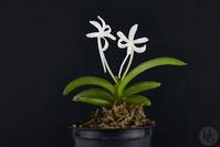 Expositions Orchidées 1134-2