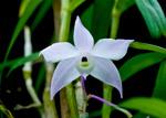 News du Monde des Orchidées 31-48