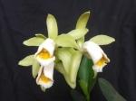 fontaine d'orchidées