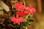 News du Monde des Orchidées 33-72