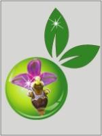 Orchidées terrestres d'Europe 502-12