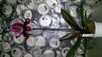 Culture des Odontoglossum, Oncidium, Trichopilia et alliés 571-47
