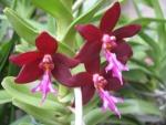 News du Monde des Orchidées 620-83