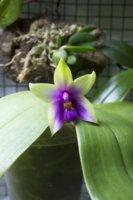 Expositions Orchidées 74-44