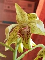 Questions spécifiques par genre d'orchidée et fiches de culture 747-90