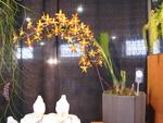 News du Monde des Orchidées 813-88