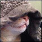 Cat Litterer