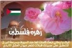 زهرة فلسطين
