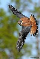 Quiethawk