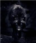 Lobo De Sombras
