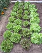 JO-jardin62