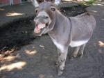 DonkeyRi