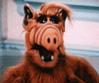 Alf-1974