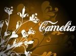 ♥camélia♥
