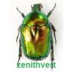 zenithvert