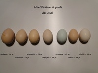 Les expositions avicoles en France, Belgique et ailleurs 10641-69