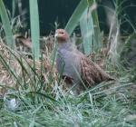 L'aviculture -> Informations et legislation 8965-62