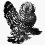 Les autres races de naines 9757-44