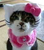 Cat Fashions