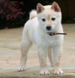 Lucky_the_dog
