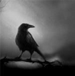 Rozen Crow