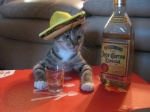 tequilafunsize