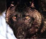 Wolfy?!
