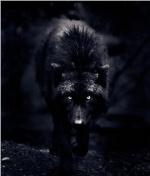 orionsbeltwolf