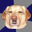 El perro de Joa