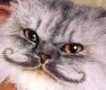 cathairmoustache