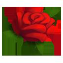 :rosa: