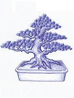 Bonsai Kas
