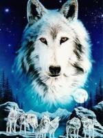 D.Wolf