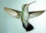 birdsong123