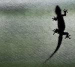 lizardz6