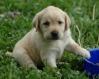 Galería Puppy-10
