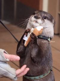 Undead Otter