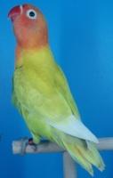 aviariowendoline