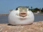 radioactfish'